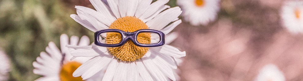 Daisy with glasses